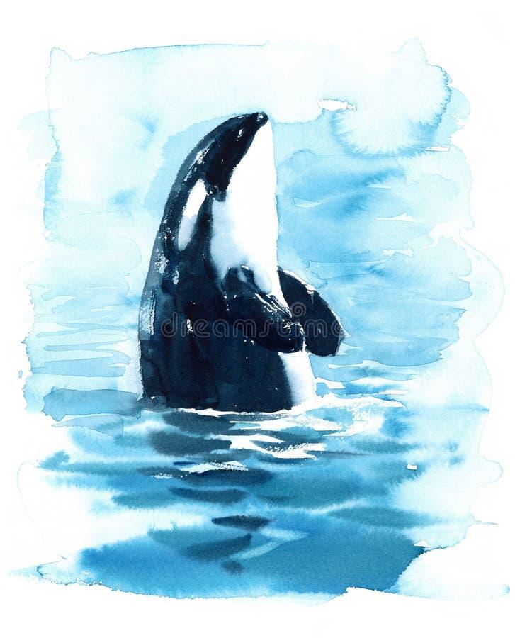 Baleia de assassino da orca na ilustração da aquarela da água pintado à mão ilustração do vetor