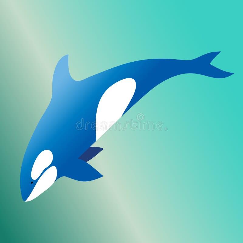 Baleia de assassino da orca no oceano no vetor foto de stock