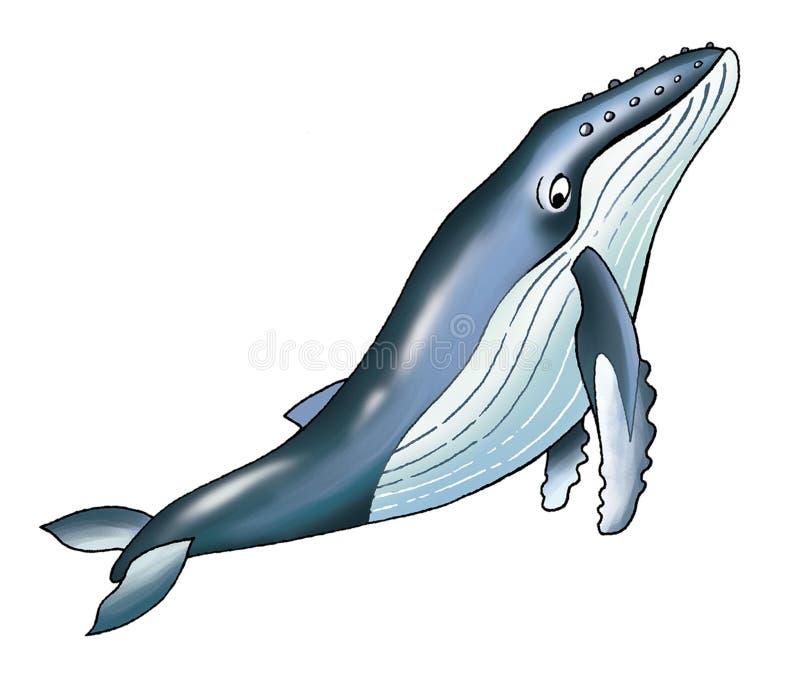 A baleia de corcunda ilustração stock