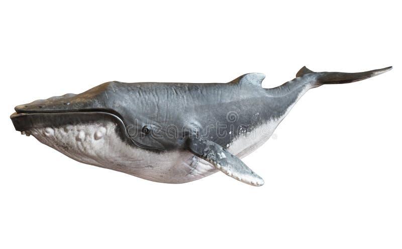 Baleia de corcunda em um fundo branco isolado