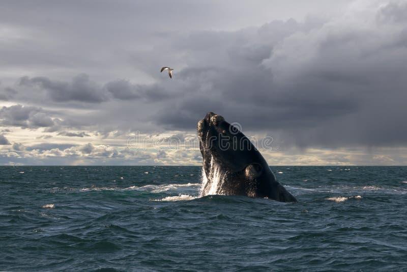 A baleia e a gaivota imagens de stock royalty free