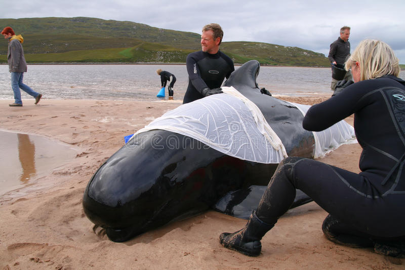 Baleia encalhada imagem de stock