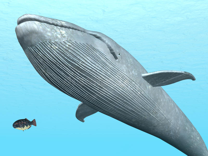 Baleine bleue illustration libre de droits