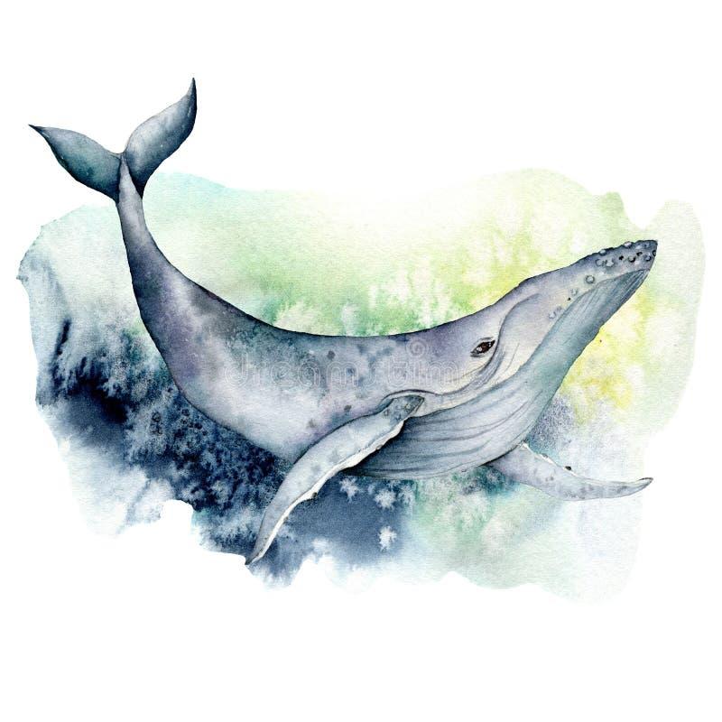 Baleine bleue d'aquarelle Illustration animale sous-marine d'isolement sur le fond blanc Pour la conception, les copies ou le fon illustration de vecteur