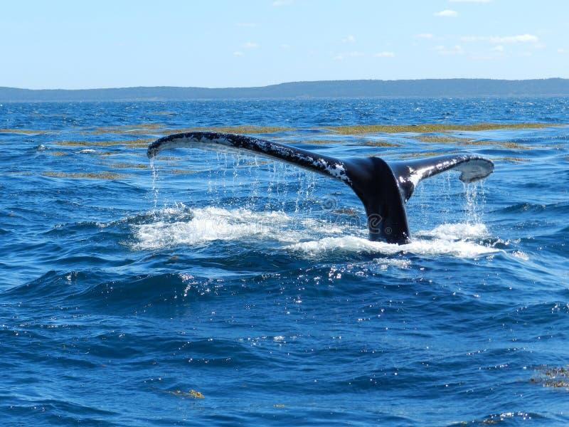 Baleine d'un conte photo libre de droits