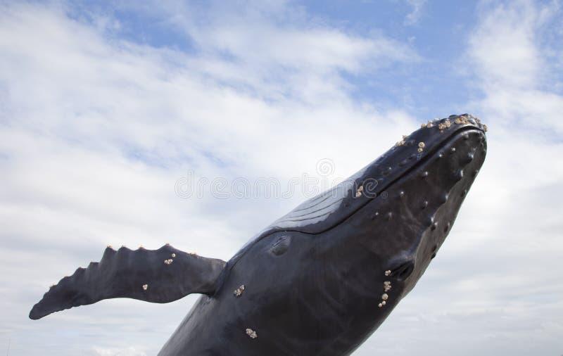 Baleine de bosse avec le ciel bleu photo libre de droits