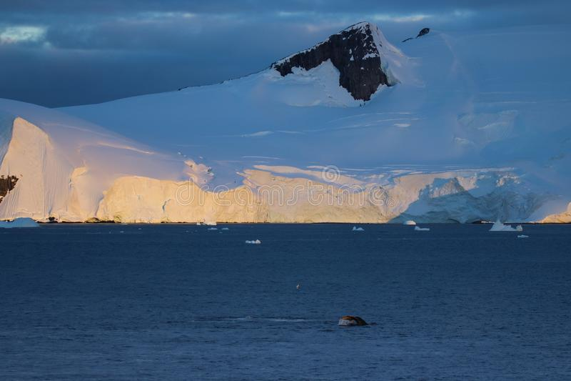 Baleine de bosse, péninsule antarctique photo stock