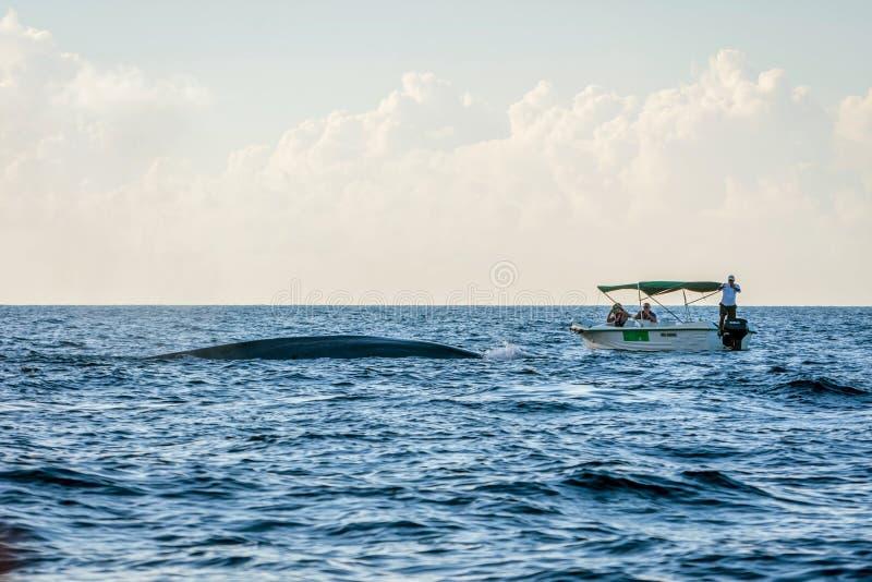 Baleine observant en le bateau photos libres de droits