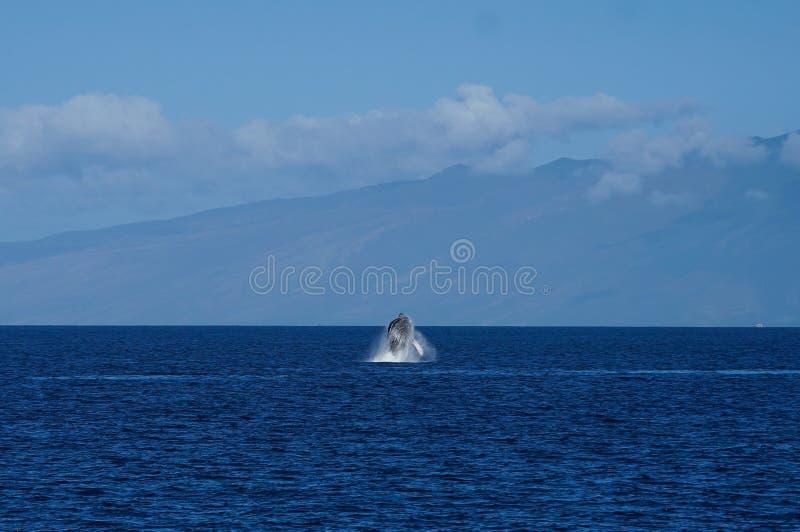 Baleine ouvrant une brèche dans l'océan photo stock
