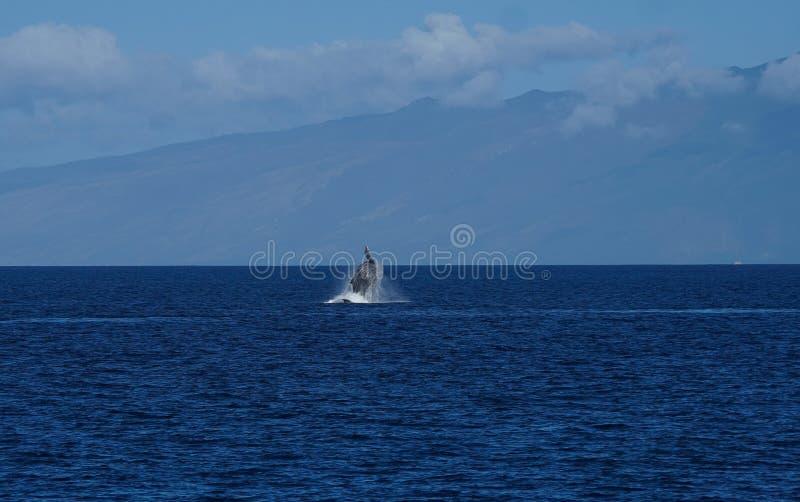 Baleine ouvrant une brèche dans l'océan images stock