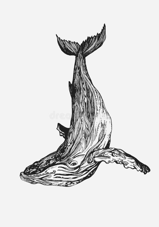 Baleine tir?e par la main Illustration de baleine animal d'oc?an photographie stock libre de droits