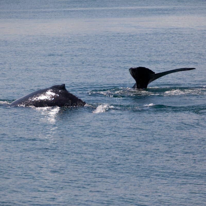 Baleines photographie stock
