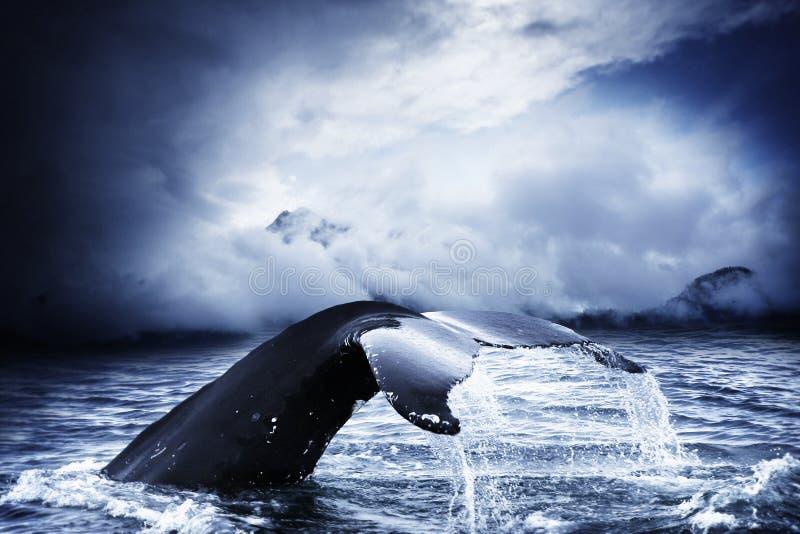 Balena fotografia stock libera da diritti