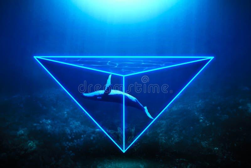 Balena al neon fotografia stock
