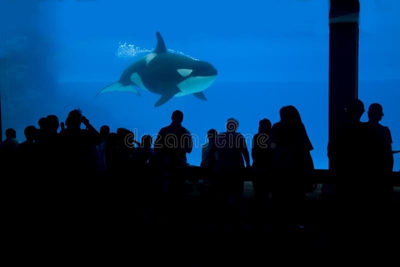 Balena che guarda in niagara fotografia stock