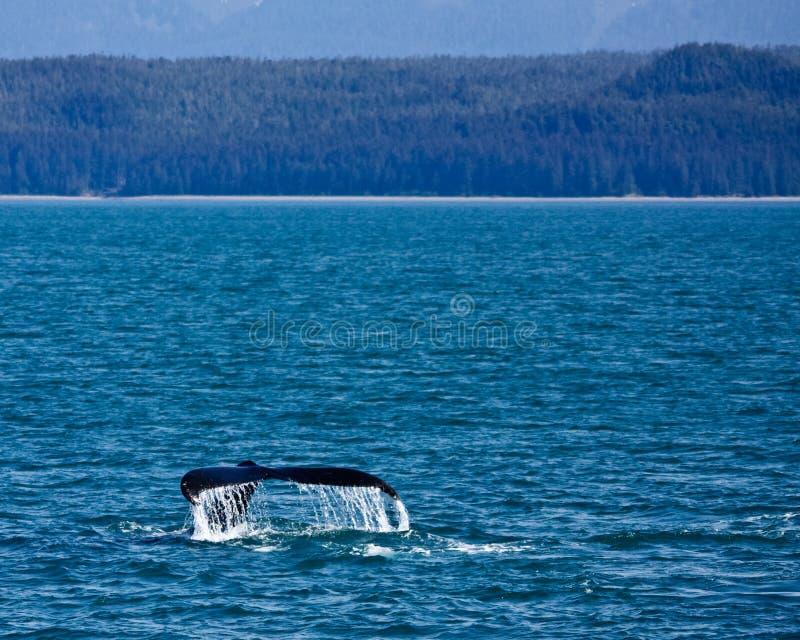 Balena di immersione subacquea immagine stock libera da diritti