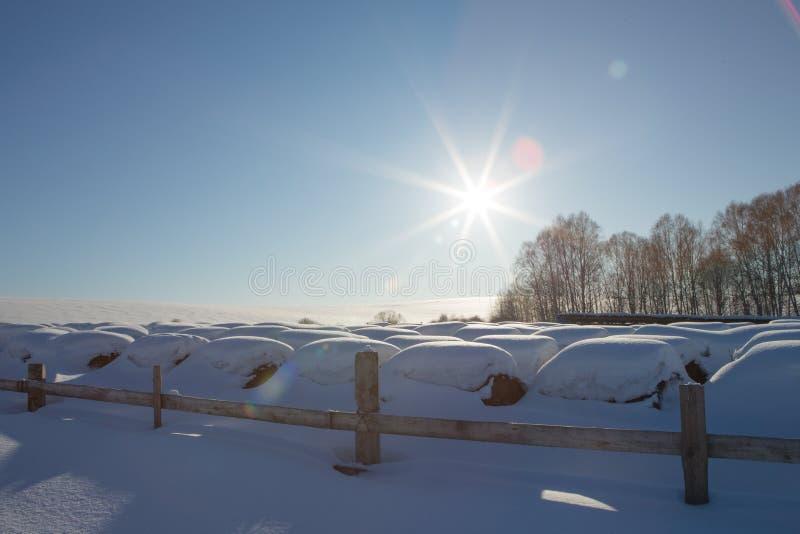 Baler av hö i ett vinterfält under snön höstackar i lantgården arkivfoto