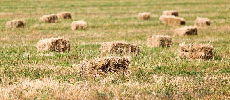 Baler av hö i fältet arkivbild
