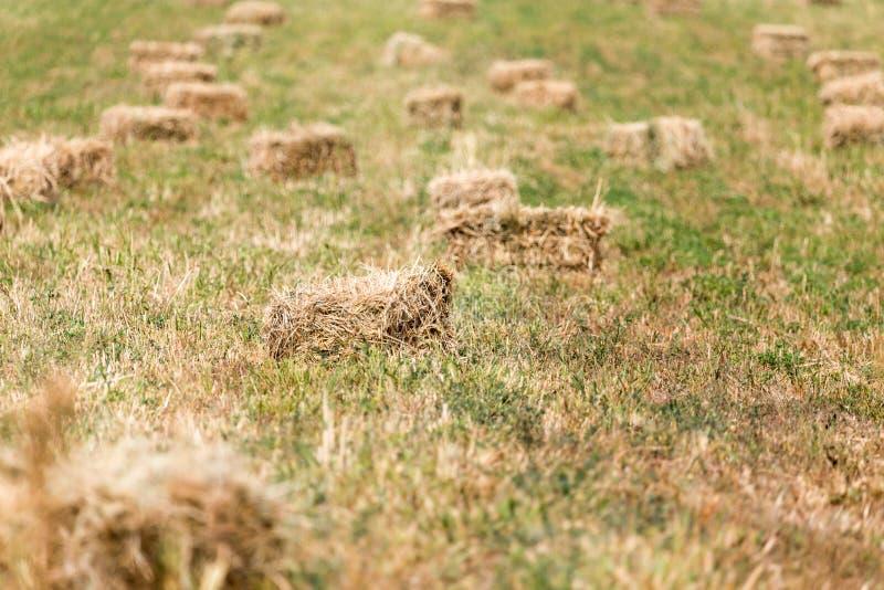 Baler av hö i fältet royaltyfri fotografi