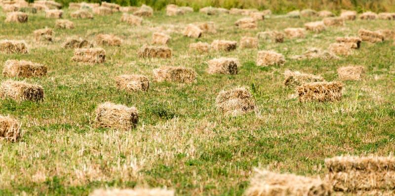 Baler av hö i fältet royaltyfria foton