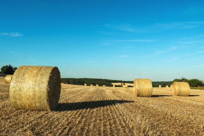 Baler av hö som ligger på ett mejat fält med en skog i bakgrunden fotografering för bildbyråer