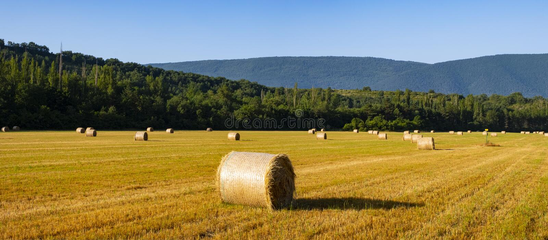 Baler av sugrör i en äng royaltyfri fotografi