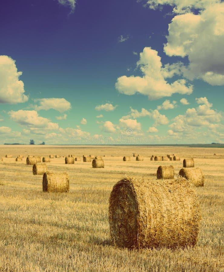 Baler av sugrör i fältet - retro stil för tappning fotografering för bildbyråer
