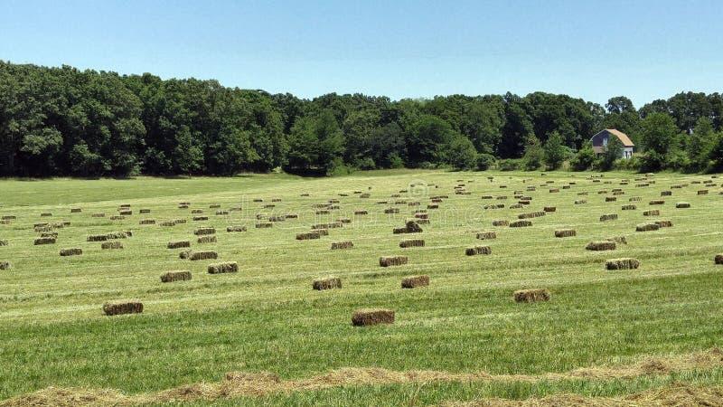 Bales сена в поле стоковое фото rf