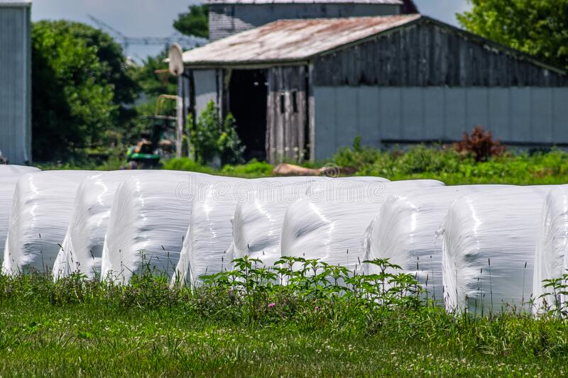 Bales of Farm Silage Wrapped in Plastic royalty free stock image