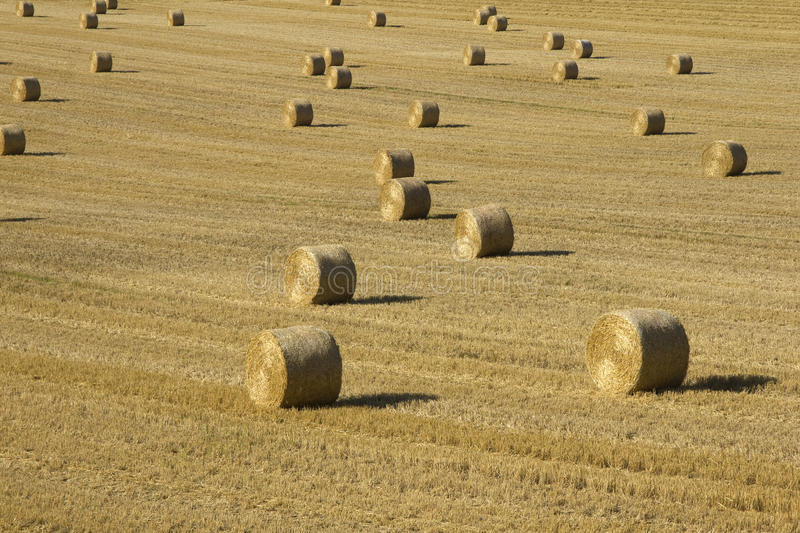 Download Bales in field stock photo. Image of meadow, evening - 27048954