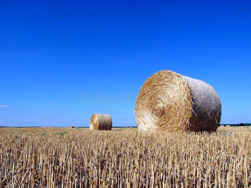 bales field hay στοκ φωτογραφία με δικαίωμα ελεύθερης χρήσης