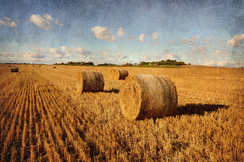Download Bales Of Hay Stock Images - Image: 20827324