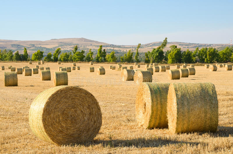 Download Bales of hay stock photo. Image of straw, bales, harvest - 25890142