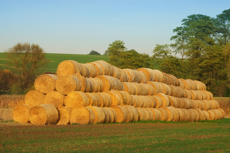 Bales of Hay stock photo