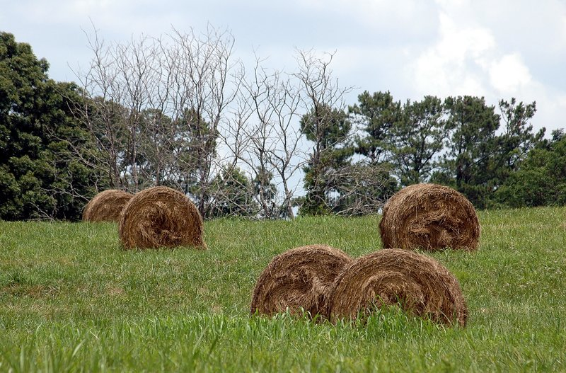 Bales Of HAY stock photography