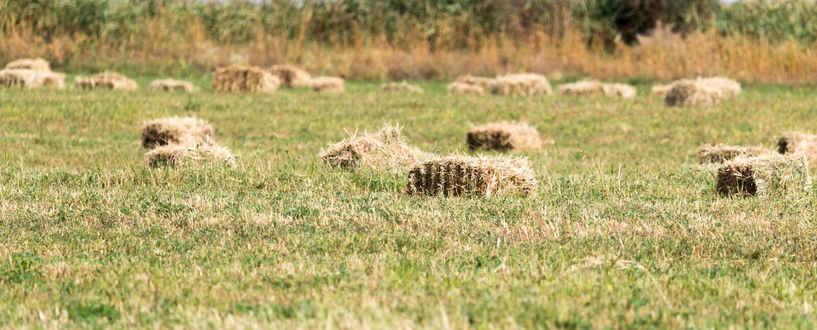 Bales of hay in the field royalty free stock photography