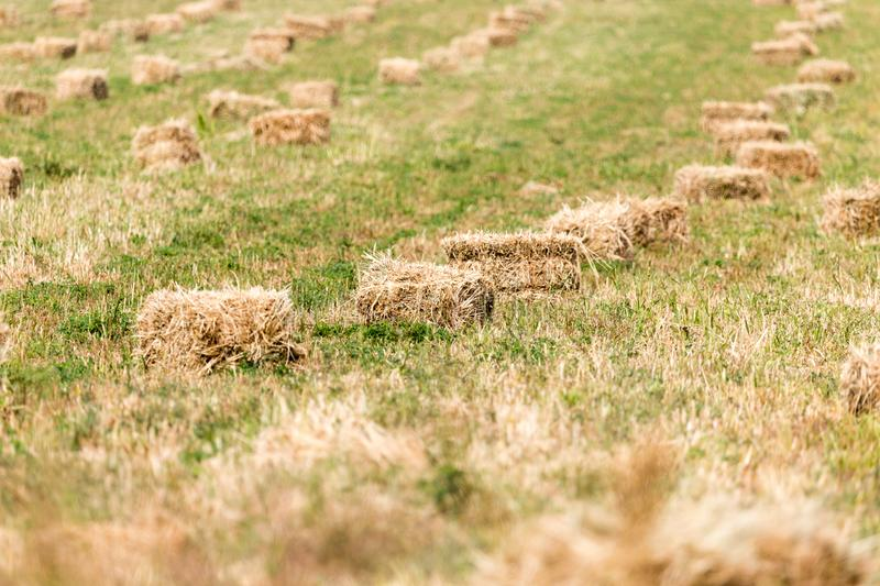 Bales of hay in the field stock image