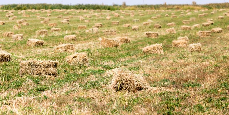 Bales of hay in the field stock images