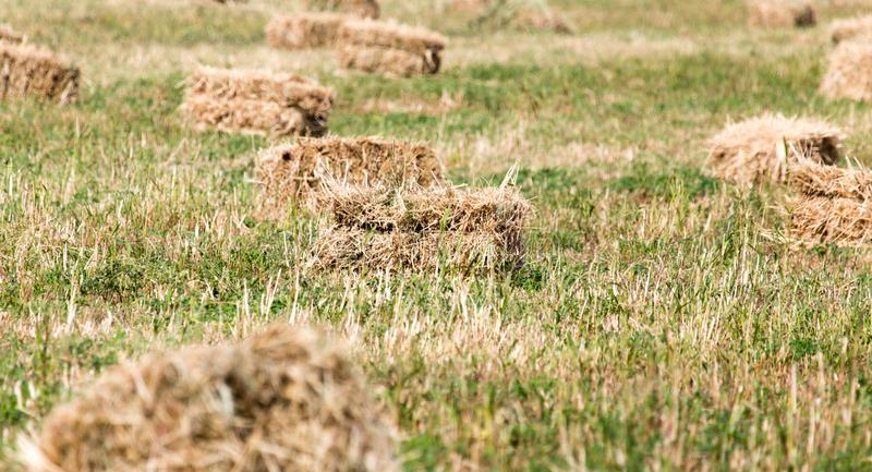 Bales of hay in the field stock photos