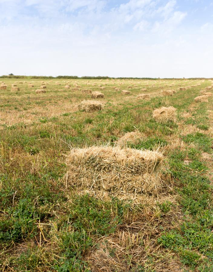 Bales of hay in the field royalty free stock image