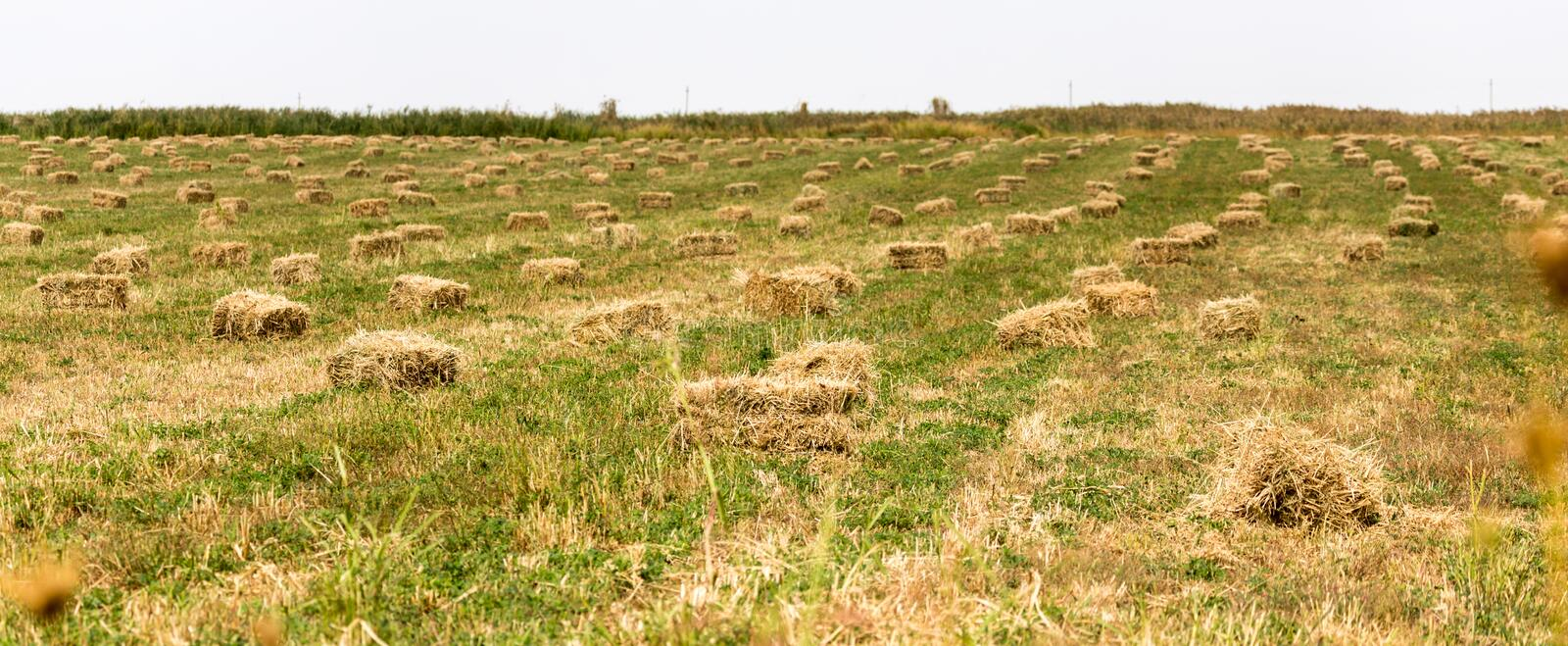 Bales of hay in the field royalty free stock images