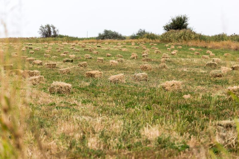 Bales of hay in the field royalty free stock photo