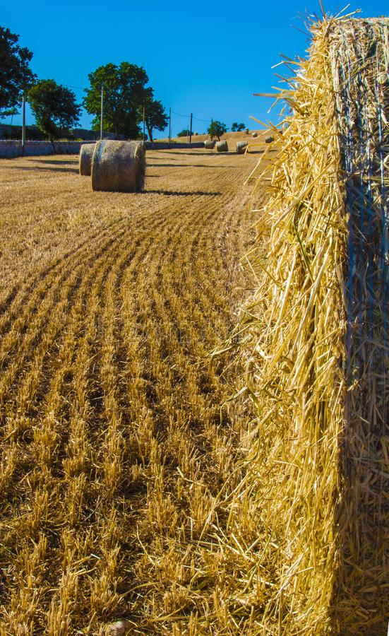 Bales of hay in the fields in summer. Time harvest royalty free stock image
