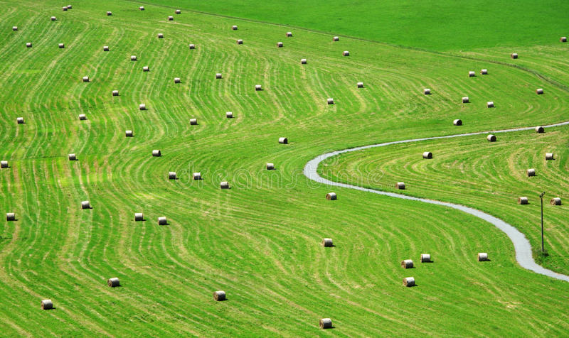 Bales of hay on meadow.  stock photo