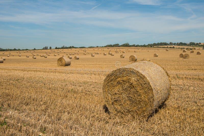 Bales of Hay på fältet royaltyfri bild