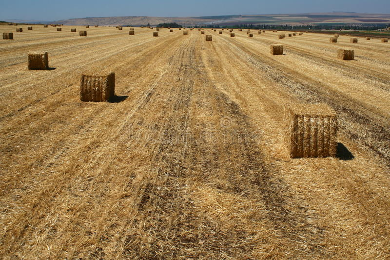 Download Bales of hay stock photo. Image of food, farm, plowed - 32414222