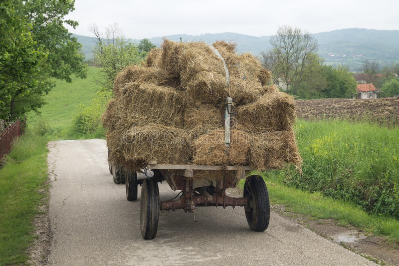 Bales of hay stacked in the cart. Tractor with hay. Bales of hay stacked in the cart stock photo