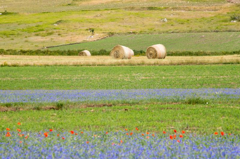 Bales of hay and wild flower fields in the plain of Castelluccio di Norcia. Apennines, Umbria, Italy. Bales of hay and wild flower fields in the plain of royalty free stock photos