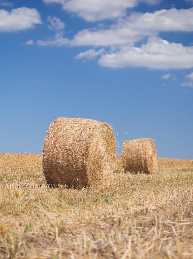 Free Bales Of Hay Stock Image - 5993051