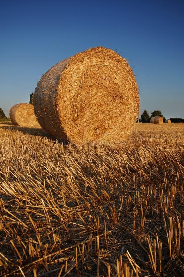 Free Bales Of Straw Stock Photo - 6045580